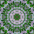 Floral Halo1 by haymelter
