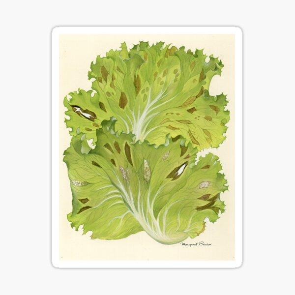 Downy Mildew of Lettuce Sticker