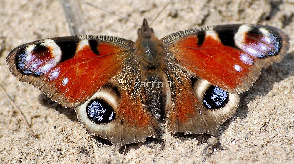 flutterby by zacco