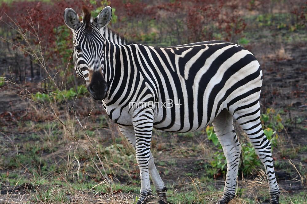Zebra 2 by mmynx34