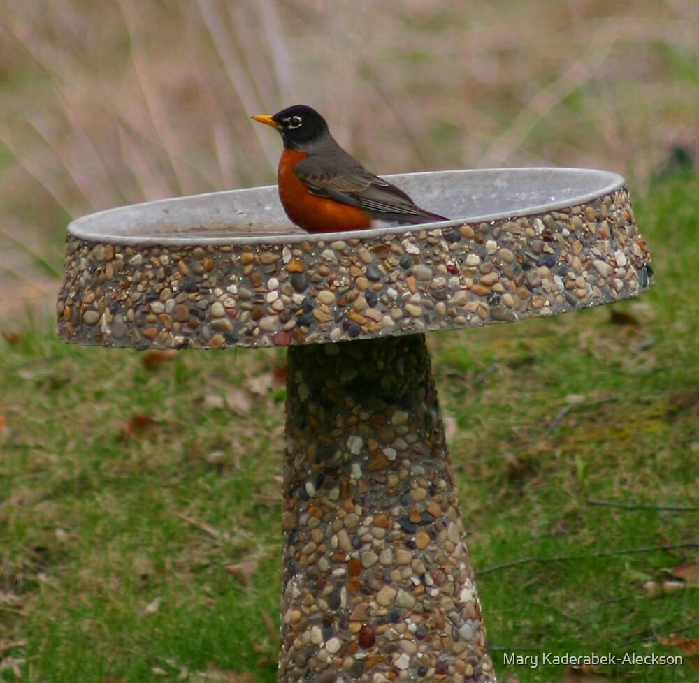Robin birdbath by Mary Kaderabek-Aleckson