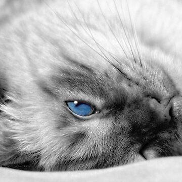 Little Boy Blue - Siamese Cat by SalonOfArt