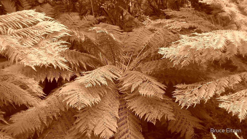 Tree Fern by Bruce Eitzen