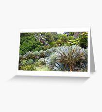 Cycad Garden Greeting Card