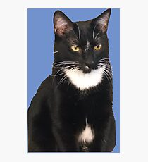 Vincent on Blue Photographic Print