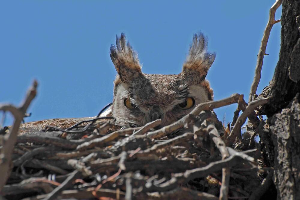 Watchful Eyes by raptrlvr
