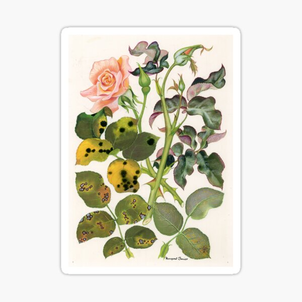 Foliage Diseases of Roses Sticker