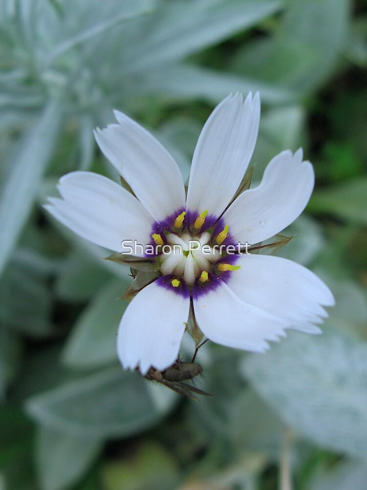 A flower by Sharon Perrett