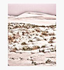 Scrub Brush Photographic Print