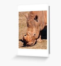 Rhino portrait Greeting Card