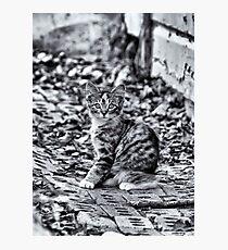 Camo Photographic Print