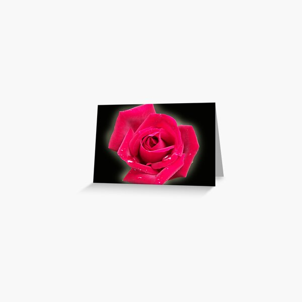 Misty Rose Greeting Card