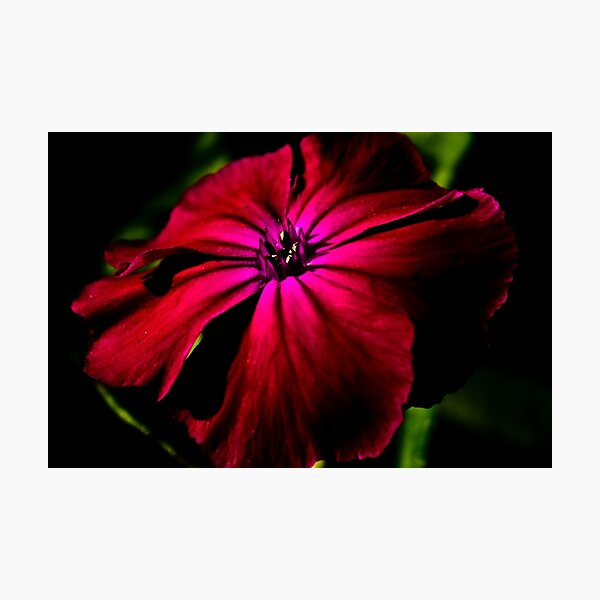 Purple Wild Flower Photographic Print
