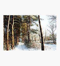 Forest Snow Scene Photographic Print