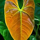 jungle leaf- Vinales, Cuba by David Chesluk