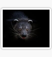 A Dark Detailed Binturong or Bearcat (Arctictis binturong) Sticker