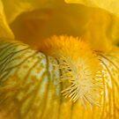 Iris Macro by Gary L   Suddath