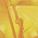 The Visitor v.2 by tropicalsamuelv