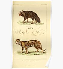 The Animal Kingdom by Georges Cuvier, PA Latreille, and Henry McMurtrie 1834 601 - Mammalia Mammals Poster