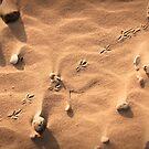 Walk This Way > > > by Motti Golan