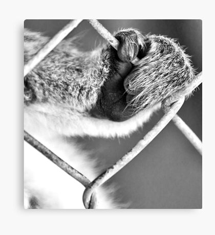 This Caged Life Canvas Print