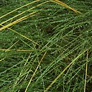 Raindrops on Grass by Hugh Chaffey-Millar