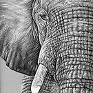 African Elephant - Afrikanischer Elefant by Nicole Zeug
