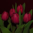 TULIPS by KeepsakesPhotography Michael Rowley