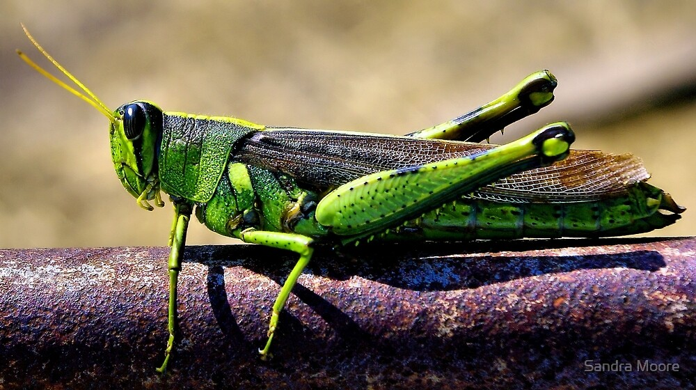 Dressed In Green by Sandra Moore