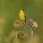 Goldfinch in Summer by Sandy Keeton