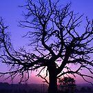 Twisted Tree Silhouette by Joel McDonald