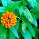Flower A L'orange by Sandra Moore