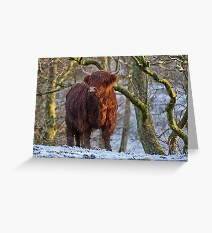Scottish Highland Cow in the Snow Greeting Card