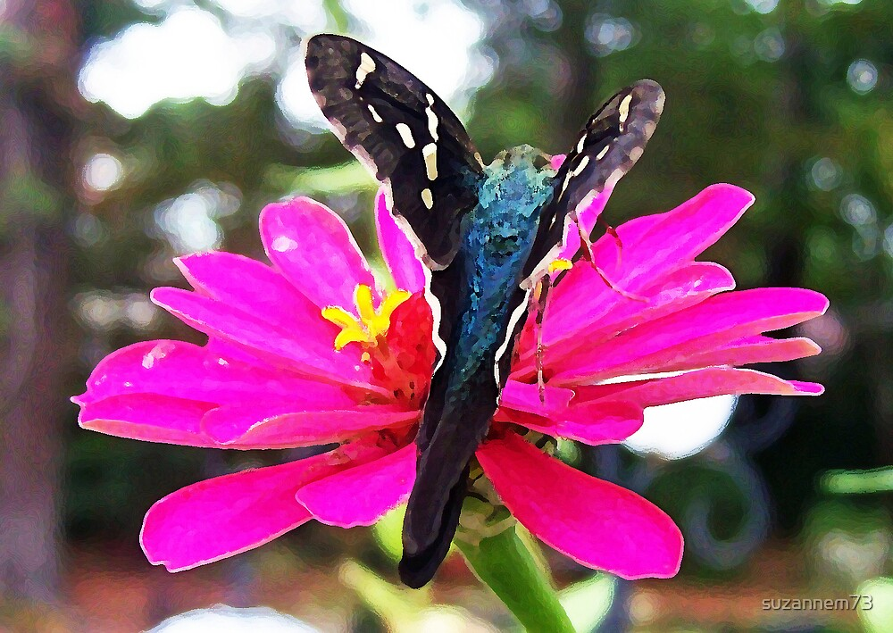 Long-Tailed Skipper on Zinnia by suzannem73