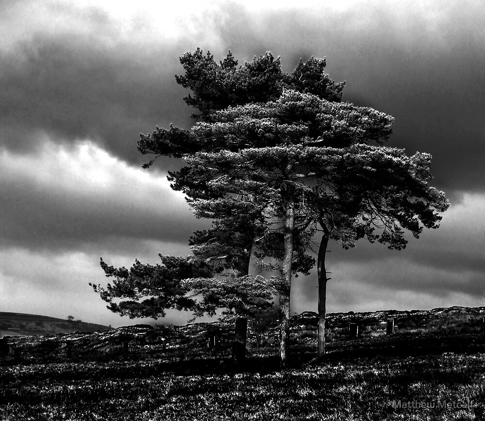 Lyme Park Tree by Matthew Metcalf