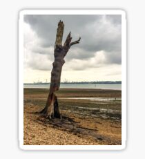Time Blasted Tree at Fawley Sticker