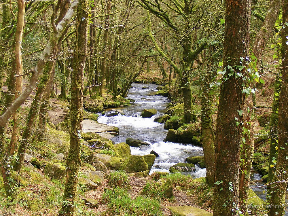 golitha falls, wooded tranquility by Jonathan France