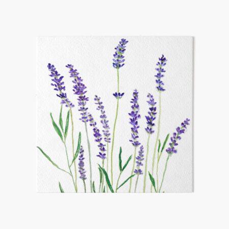lila Lavendel Galeriedruck
