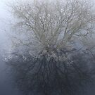 reflections in fog by KathO