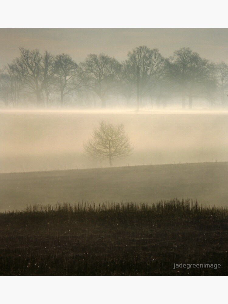 Morning Mist Tree by jadegreenimage