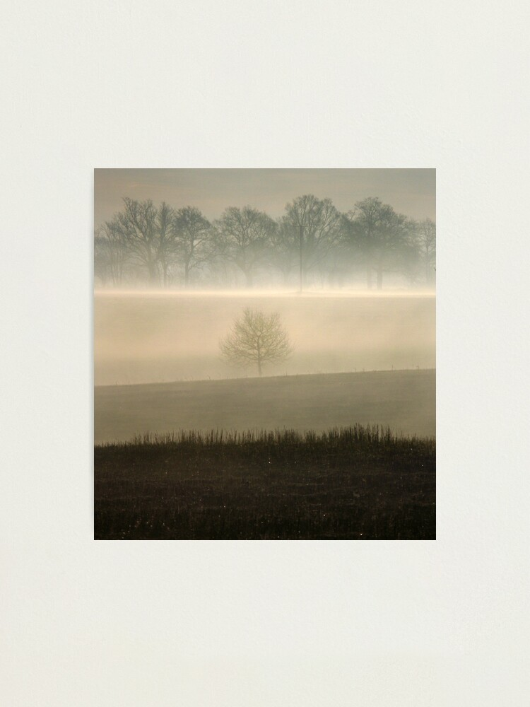 Alternate view of Morning Mist Tree Photographic Print