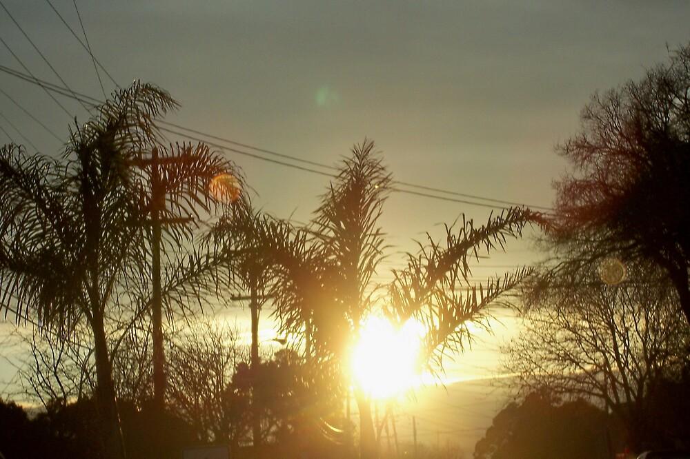 Palms on Fire by clou