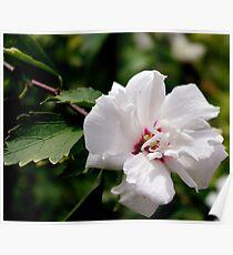 Tree Flower I Poster
