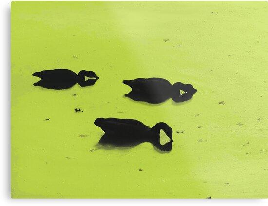 Duck Siloette 1 by Corinne Noon