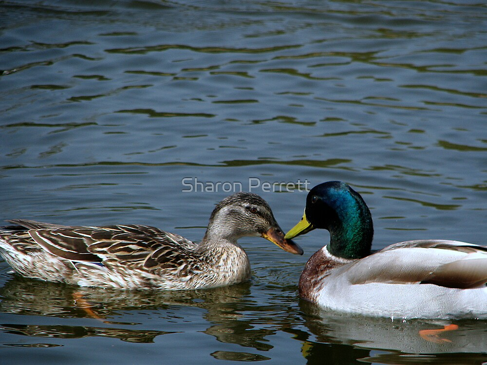 So how about a date then? by Sharon Perrett