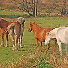 Horses by Sarah McKoy
