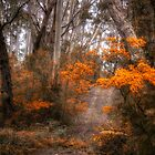 Bushland Trail - Mount Wilson NSW - The HDR Experience by Philip Johnson