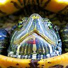 Turtle by Sandra Moore