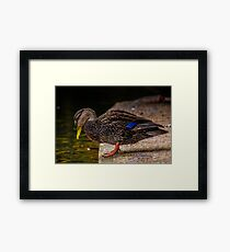 Wet Bill Framed Print