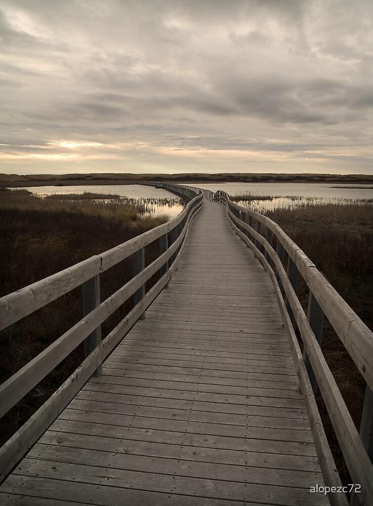 Trail in Prince Edward island by alopezc72